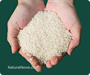 Handful-Of-Rice
