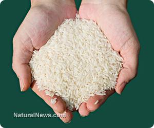 Handful-Of-Rice
